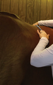 article-saddle-fitting-2