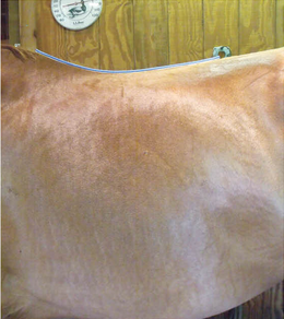 article-saddle-fitting-5